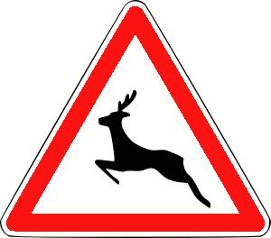 Intervention comptage des cerfs, chevreuils et lièvres communs