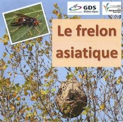 Présence frelon asiatique