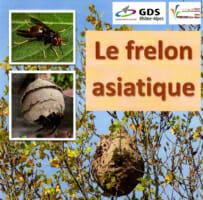 Affiche frelon asiatique